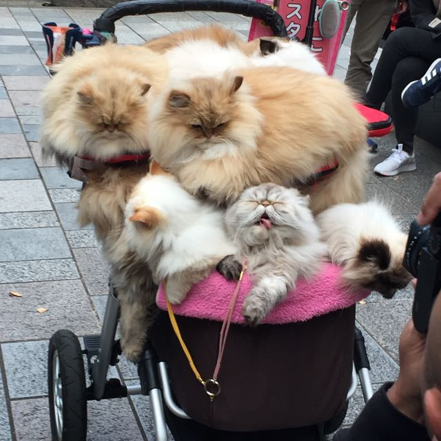 Cart of Cats
